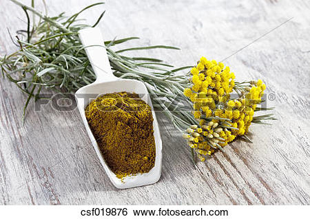 Stock Images of Curry plant (Helichrysum italicum) and shovel with.