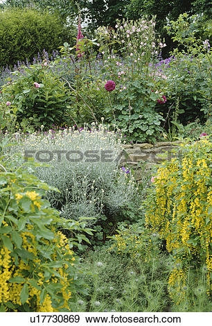 Stock Photograph of Yellow lysimachia and grey helichrysum.