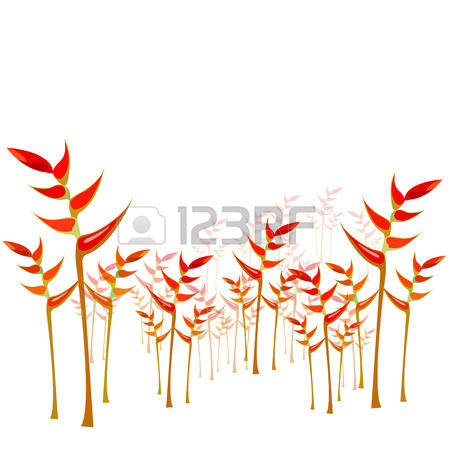 312 Heliconia Cliparts, Stock Vector And Royalty Free Heliconia.