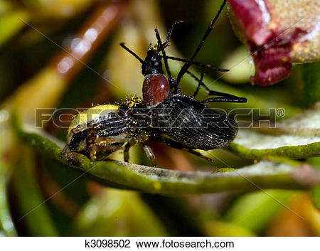 Stock Photo of Spider attacks insect k3098502.