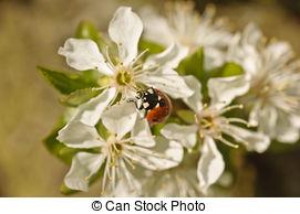 Photographies de manger, nectar, coléoptère.