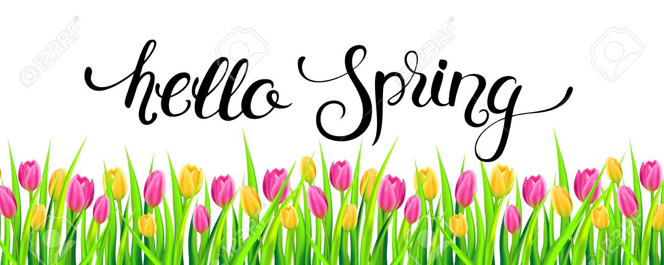 Hello spring banner with handwritten calligraphy lettering and...
