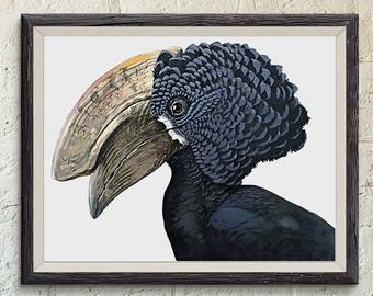 Hornbill bird.