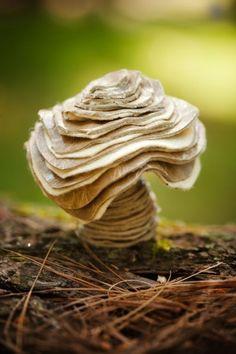 Micro Fungi.
