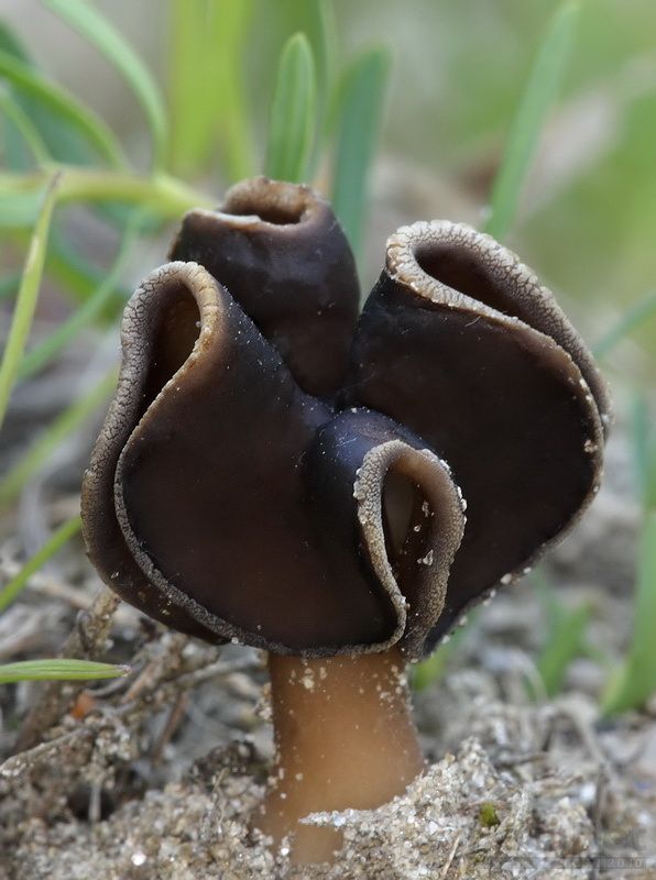 1000+ images about Mushroom Love on Pinterest.