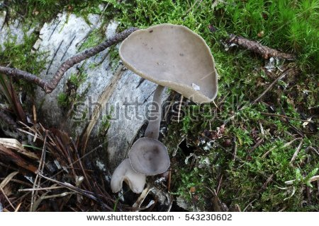 Inedible Mushrooms Stock Photos, Royalty.