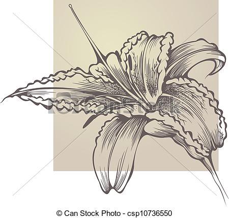Clipart Vector of Flower blooming Hemerocallis csp10736550.