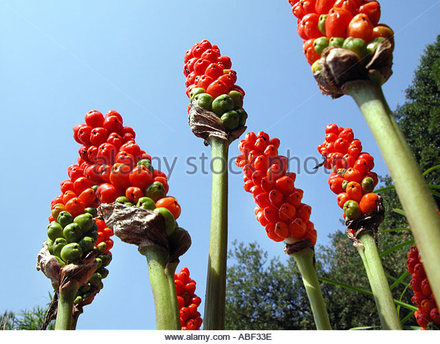 Monocot Fruit Stock Photos & Monocot Fruit Stock Images.