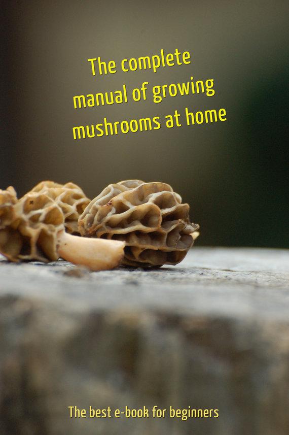 100 g mycélium iode Bolet Spawn Bolet dépoli par MushroomMycelium.