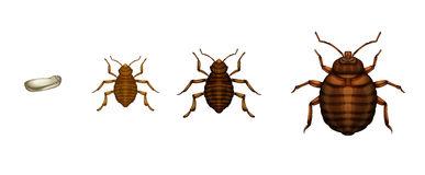 Hemiptera Clipart by Megapixl.
