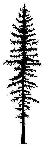 pine tree outline.