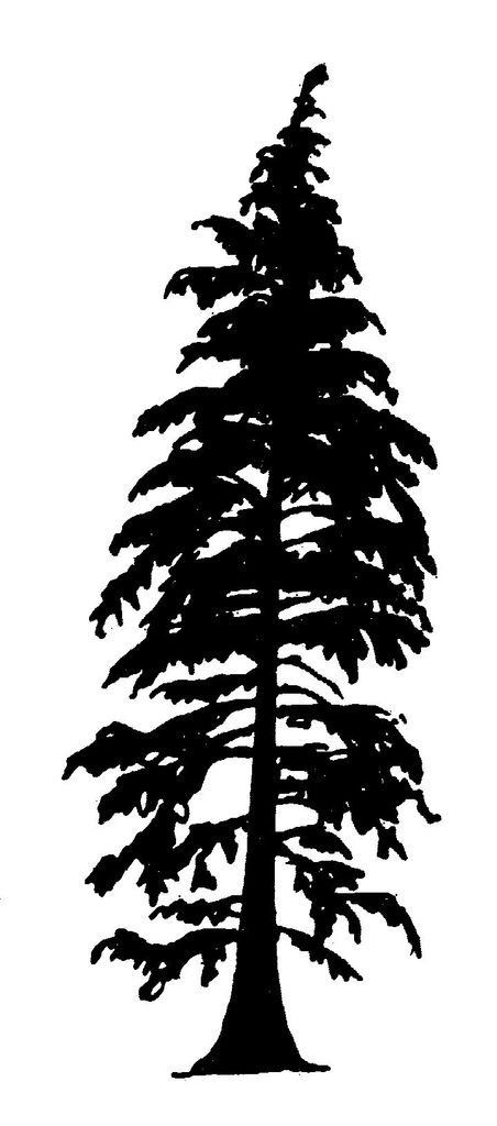 25 Best Ideas About Tree Silhouette On Pinterest