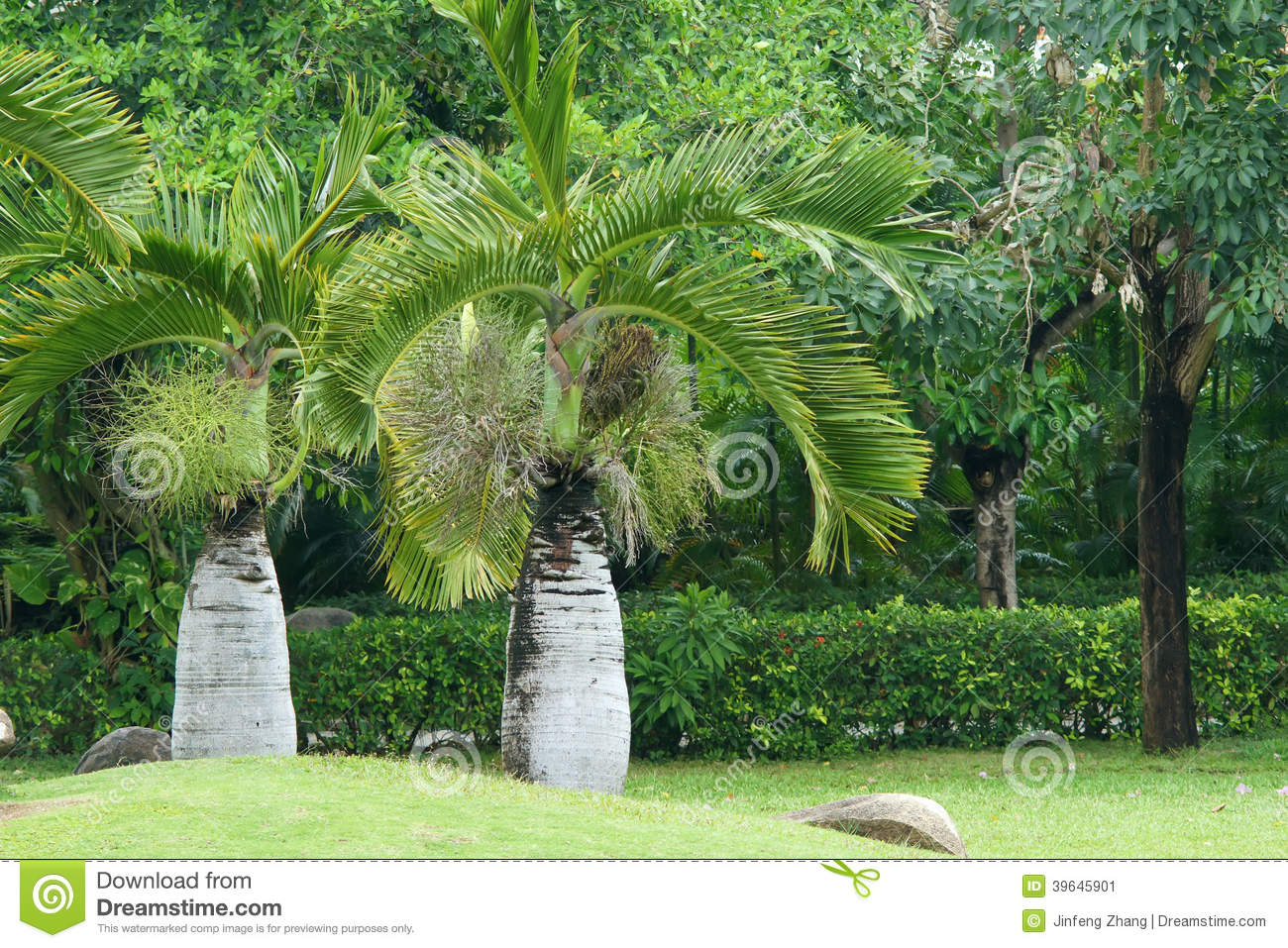Hemp Palm Stock Photo.