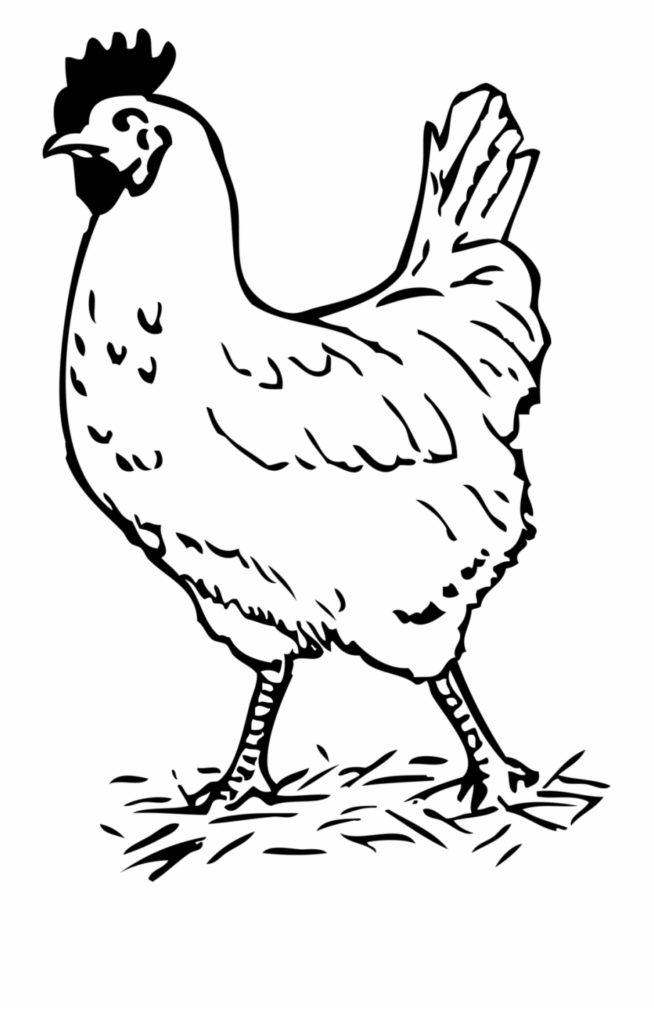 Clipart Black And White Chicken Hen Black And.