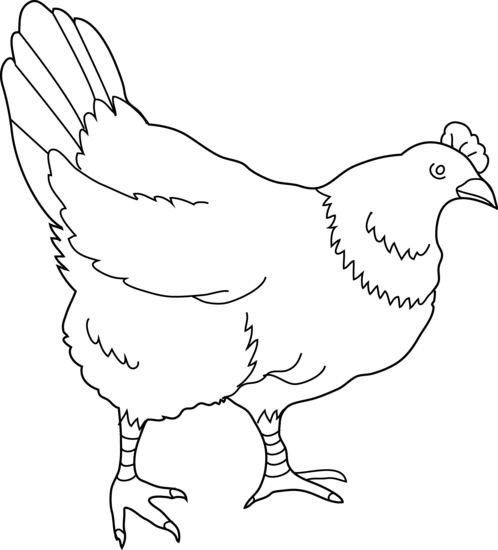 Free Hen Cliparts, Download Free Clip Art, Free Clip Art on Clipart.