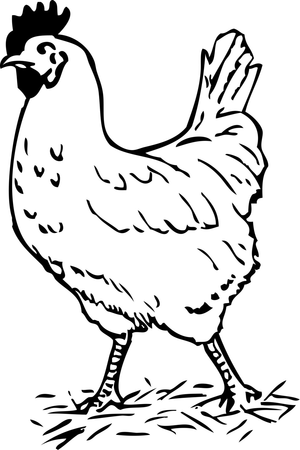 Chicken Clipart Black And White Hen Clipart Black And White for Hen.