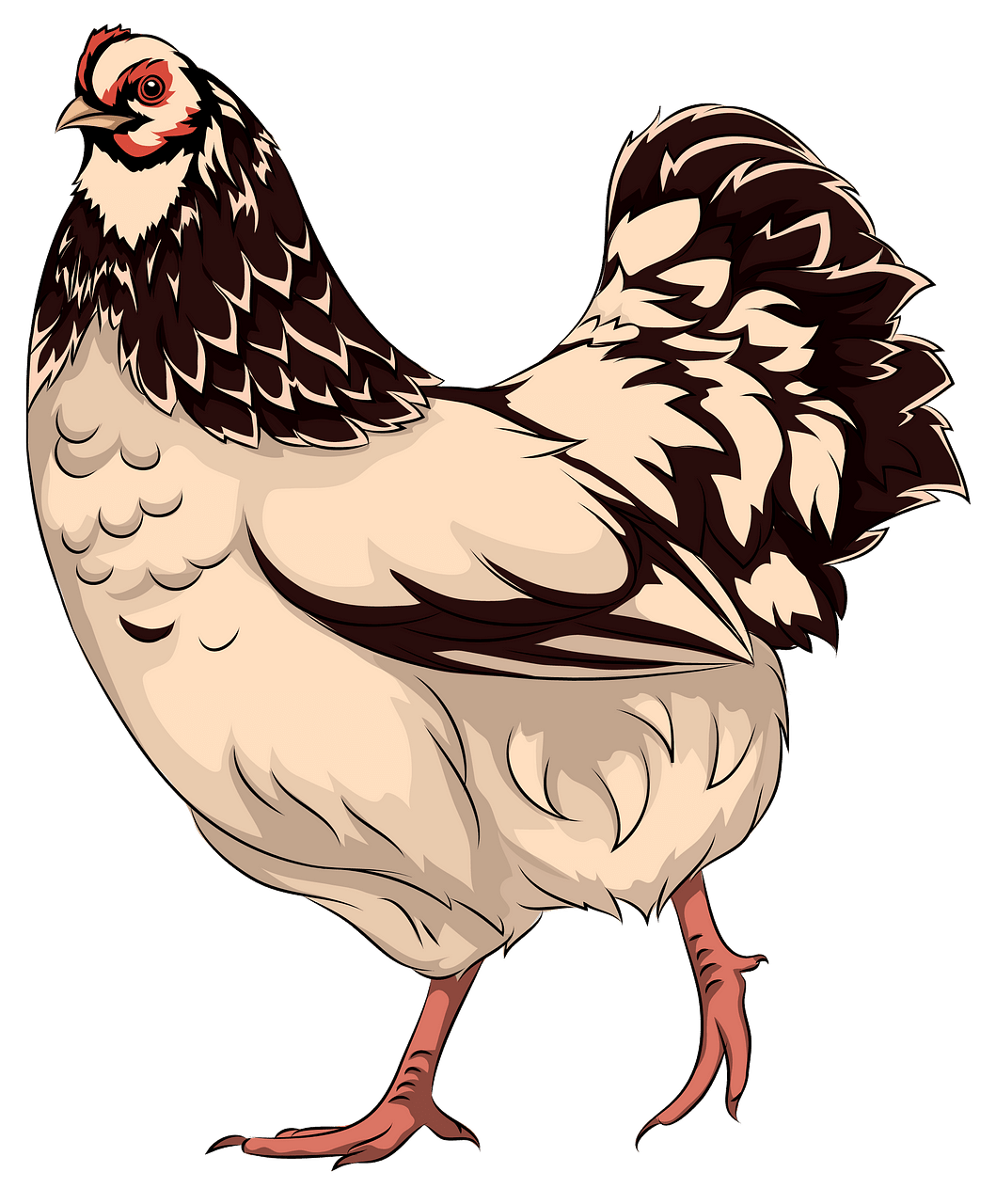 Hen clipart. Free download..