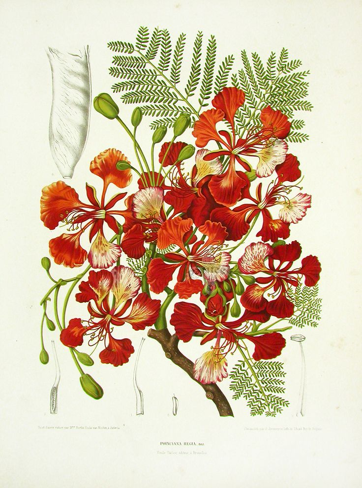 1000+ images about Botanical: Illustration & Photography on.
