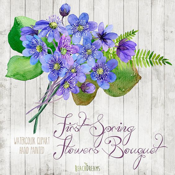 Spring Bouquet Watercolour Clipart. Hand painted flowers hepatica.