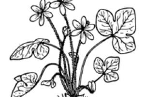 Plant Archives.