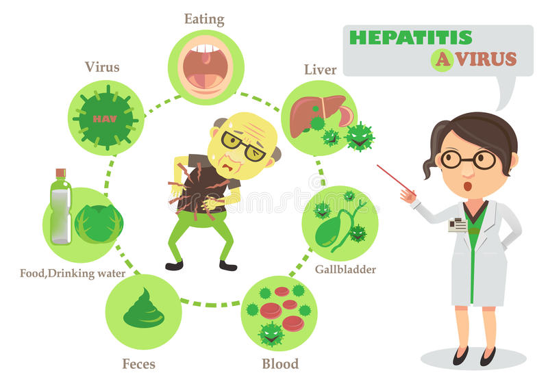 Hepatitis Stock Illustrations.