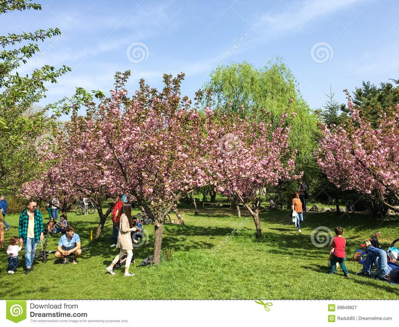 People Having Fun In The Japanese Garden Of Herastrau Public Park.