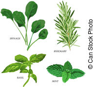 Herb Illustrations and Clip Art. 41,038 Herb royalty free.