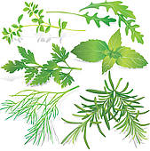 Herb clipart free.