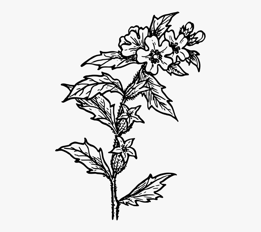 Black White Herbs Png , Free Transparent Clipart.
