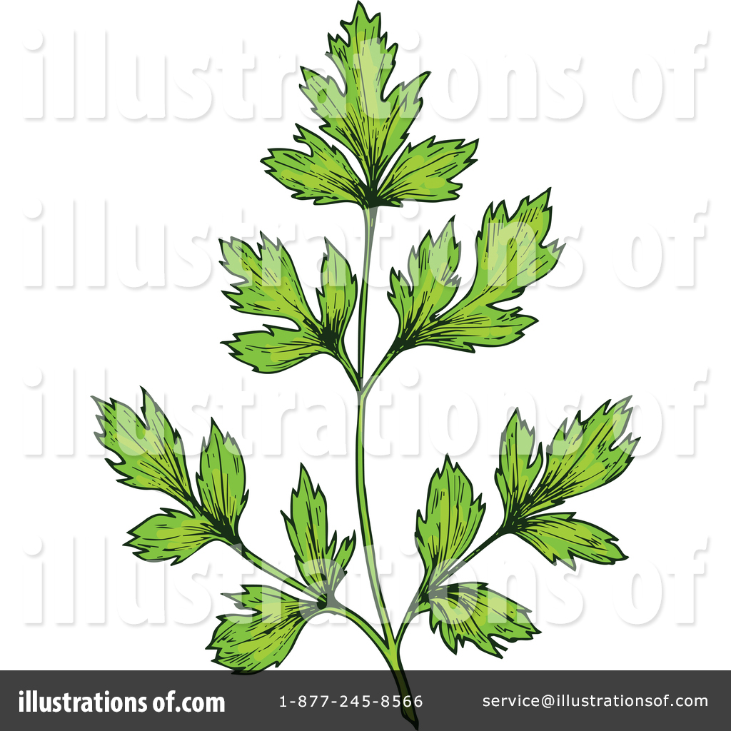 Herb Clipart #1468461.