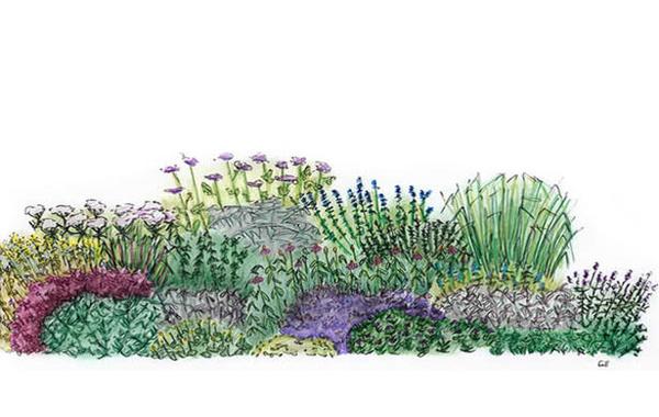 Herb garden clipart free.