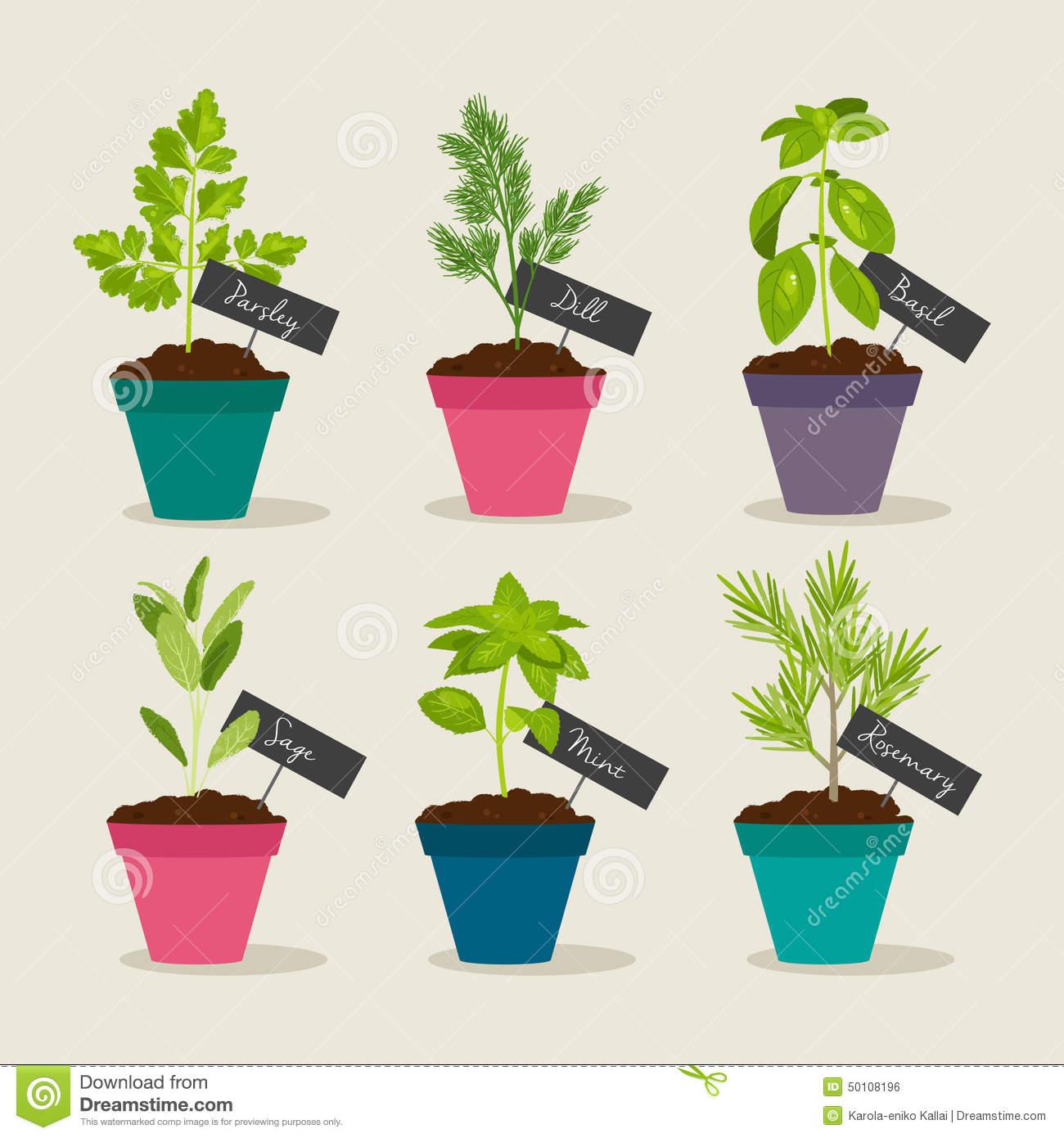 Herb Garden With Pots Of Herbs Set 2 Stock Vector.