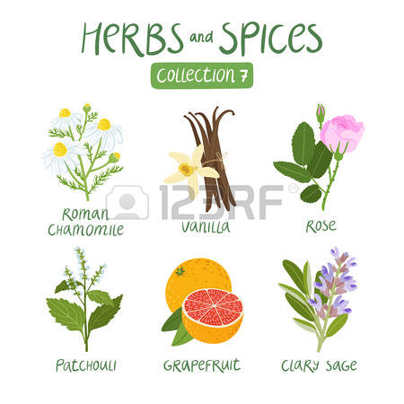 64,212 Herb Cliparts, Stock Vector And Royalty Free Herb Illustrations.