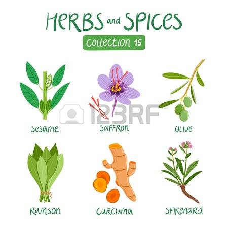 70,922 Herb Cliparts, Stock Vector And Royalty Free Herb Illustrations.