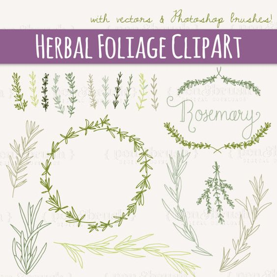 Rosemary Sprigs Clip Art // Photoshop Brushes // Hand Drawn.