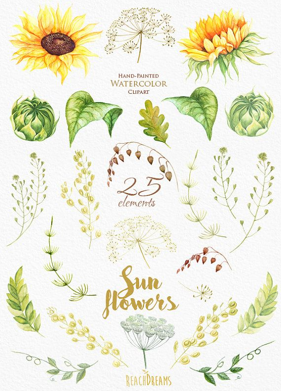 1000+ images about Watercolor herbs on Pinterest.