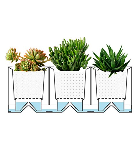 Creative Modular Selfwatering Square White Pots on a Tray for.