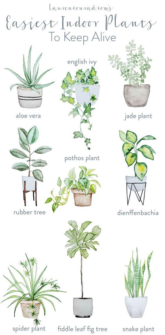 Green Thumb: The Easiest Houseplants to Keep Alive.