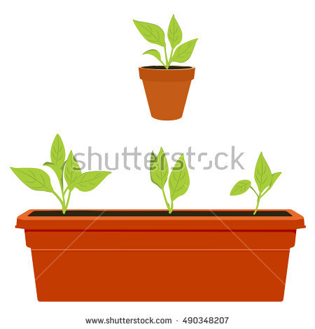 Large Potted Plant Stock Photos, Royalty.