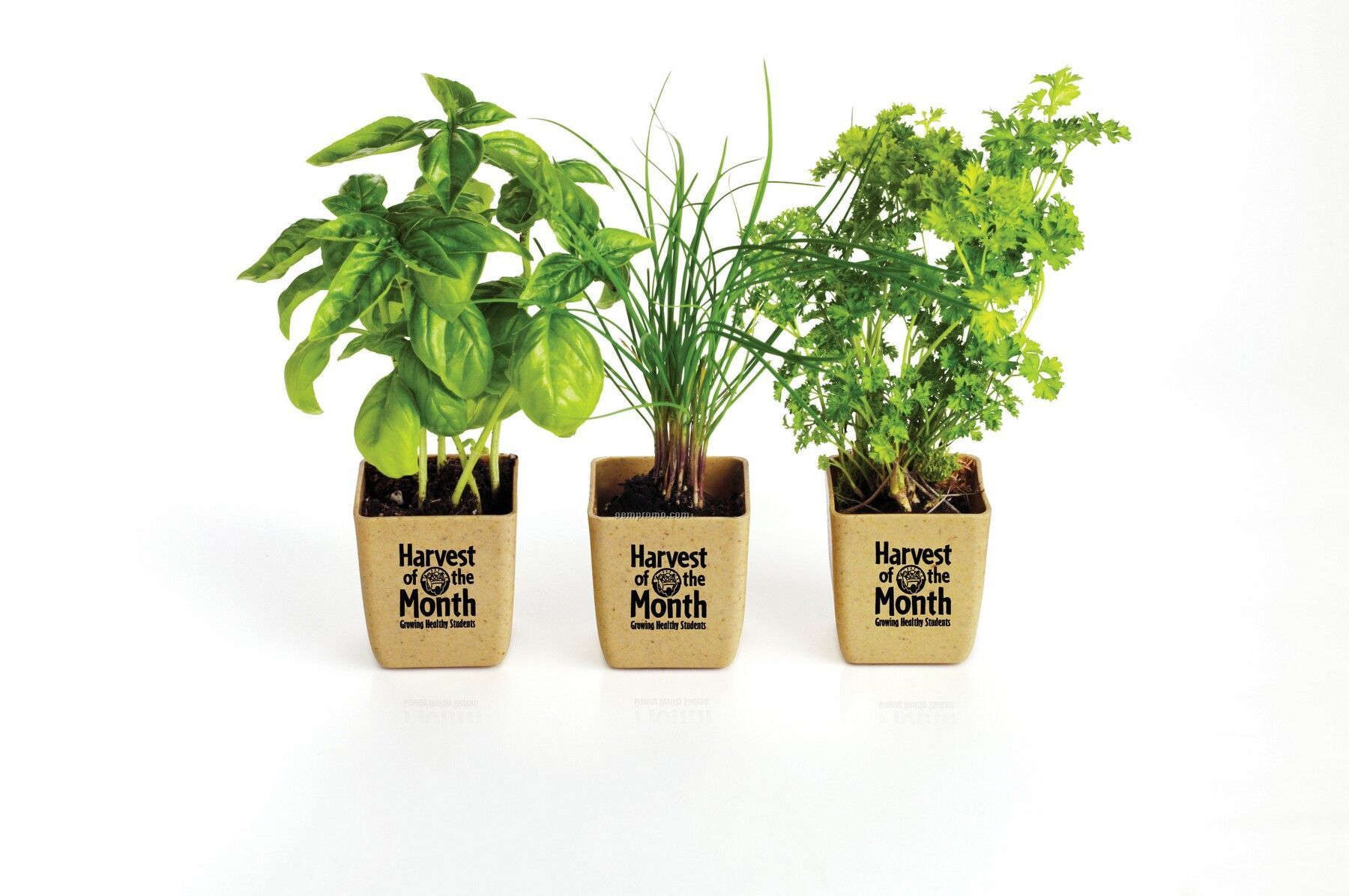 1000+ images about Awesome white planters on Pinterest.