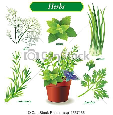 Herb Illustrations and Clip Art. 37,273 Herb royalty free.