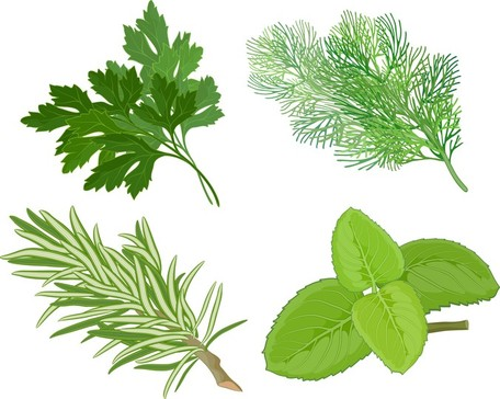Herbal Leaves 04, free vectors.
