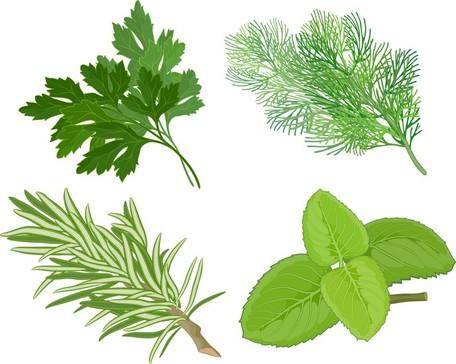 Herbal Leaves 04, free vectors.