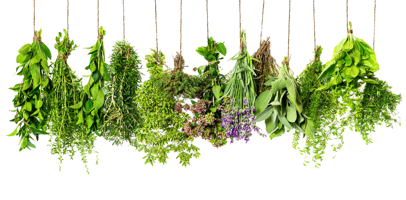 Herbs PNG HD #2603.