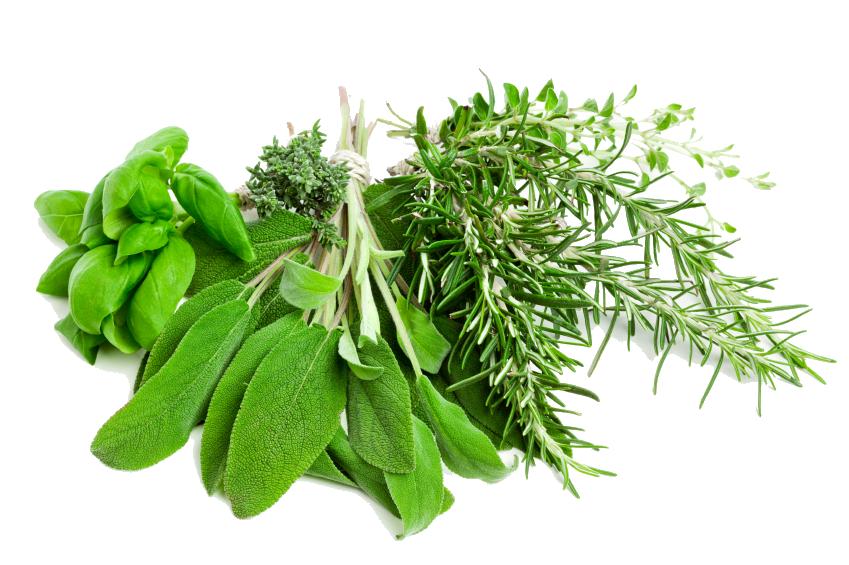 Herb PNG Transparent Images.