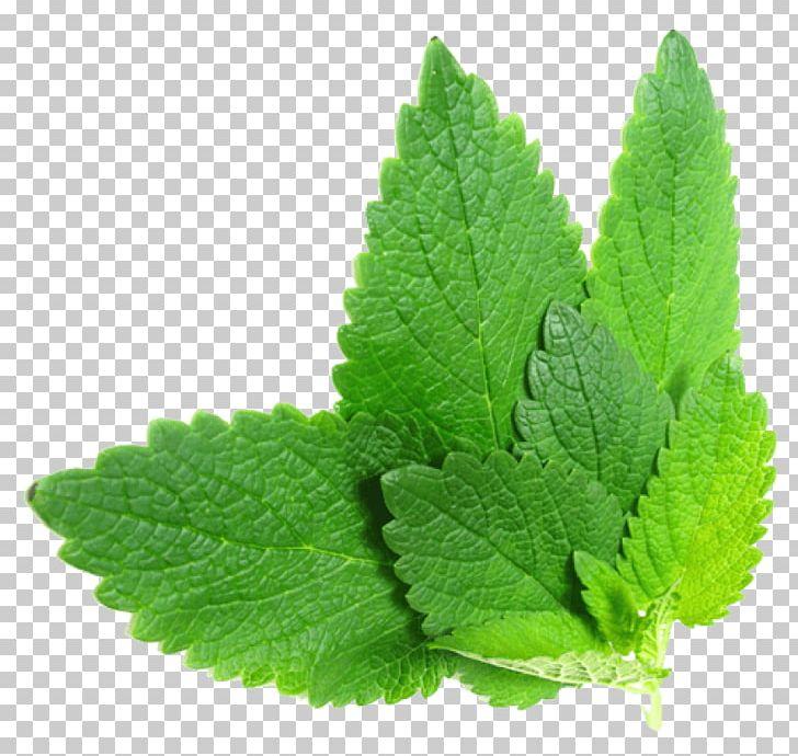 Lemon Balm Mints Herb Leaf PNG, Clipart, Fruit Nut, Herb, Leaf.