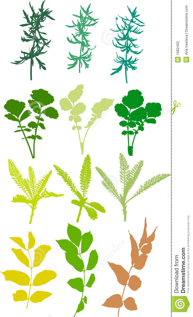 Field Plants, Herbs, Leaves.