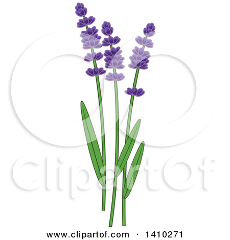 Clipart Three Lavender Stalks And Flowers On White With Copyspace.