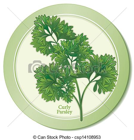 Clipart Vector of Curly Parsley Herb Icon. Fresh, flavorful leaves.