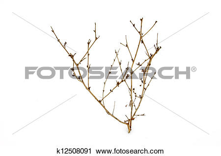 Clipart of herb stalks in the snow k12508091.